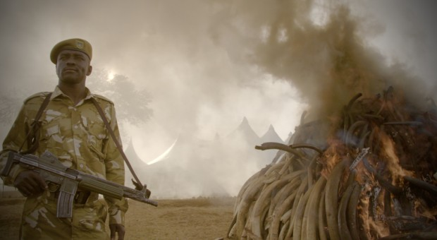 Mira el primer avance del documental The Ivory Game